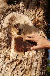 arborist-tree
