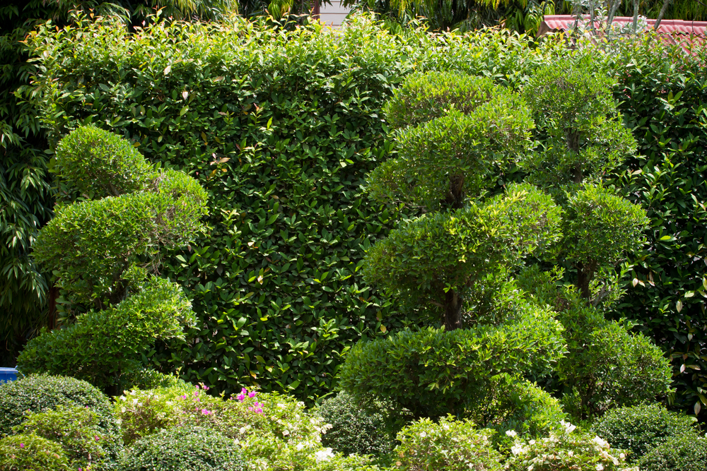 landscaping service for apartments, condominium and HOA associations