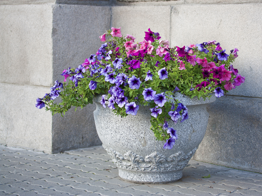commercial landscaping contractor, San Jose, CA