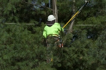 commercial tree service company