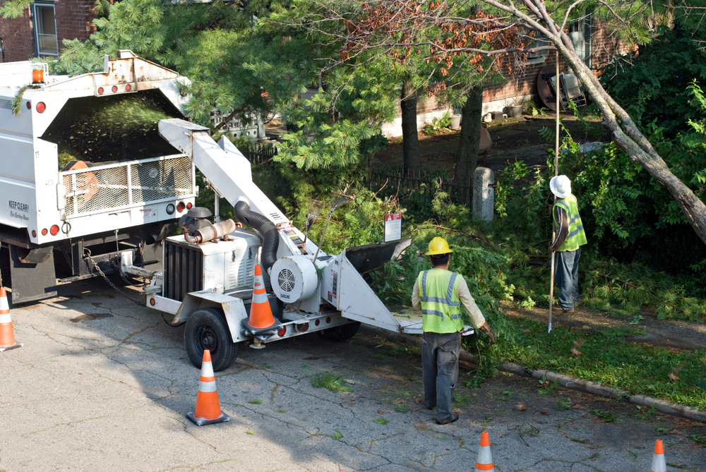 Commercial Tree Care Service